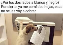 Enlace a El perro impresor