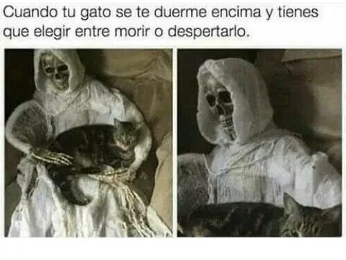Meme_otros - Prefiero morir, sin duda