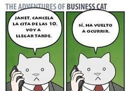Enlace a El gato empresario