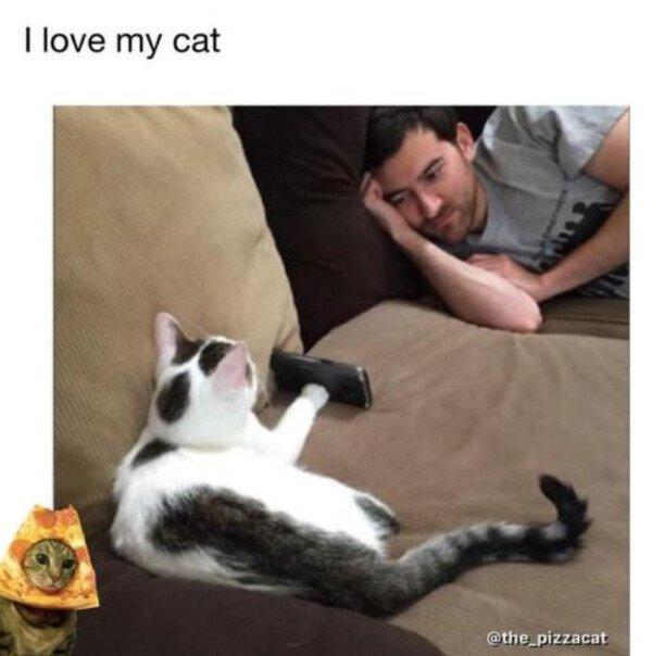 Otros - El gato de mis sueños