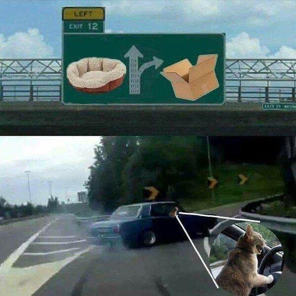 Otros - Cuando un gato va al volante