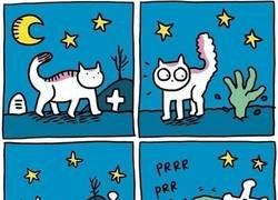 Enlace a Ni bajo tierra puedes resisitirte a acariciar un gato