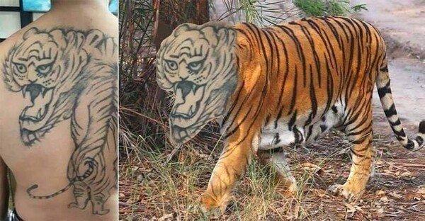 Meme_otros - El temible tigre de bengala