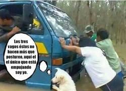 Enlace a Ojo, es un meme; los perros no tienen capacidad cognitiva para tener este diálogo interno...