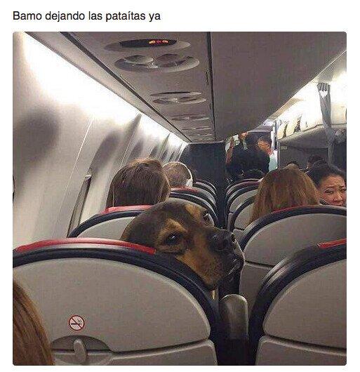 avión,patadas,perro,viaje,vuelo