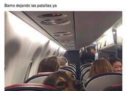 Enlace a Un viaje de perros
