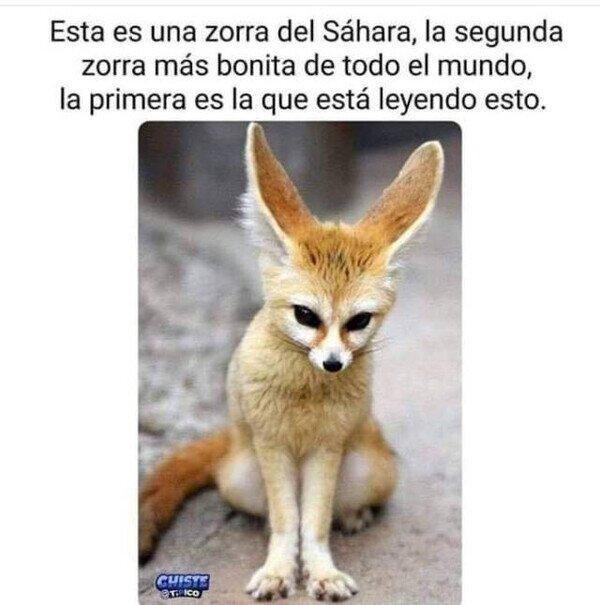 Meme_otros - La segunda zorra más hermosa del mundo