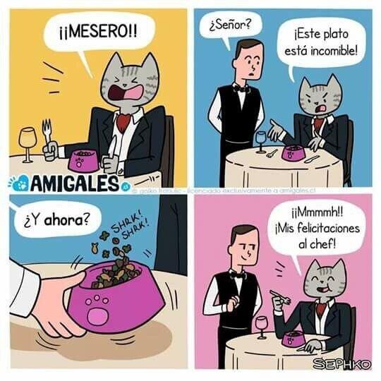 Meme_otros - Si los gatos fueran a restaurantes