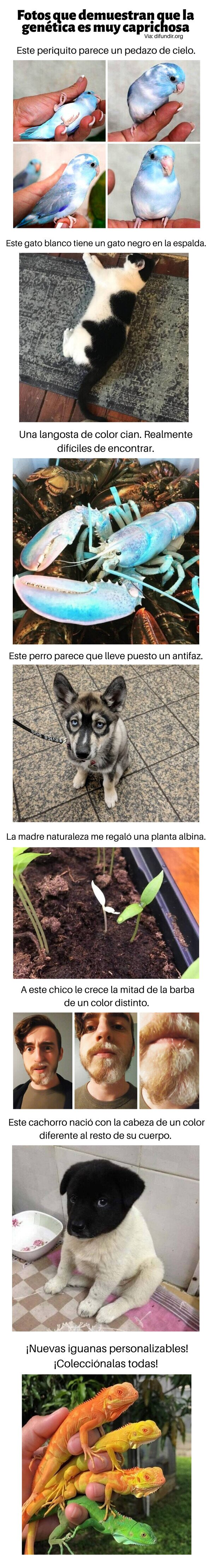 animales,genética,humanos,plantas