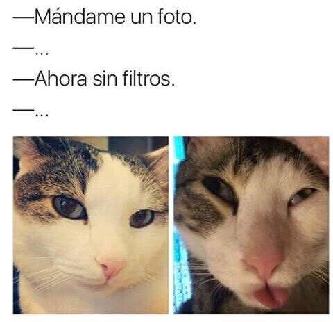 Meme_otros - Aquí hay gato encerrado