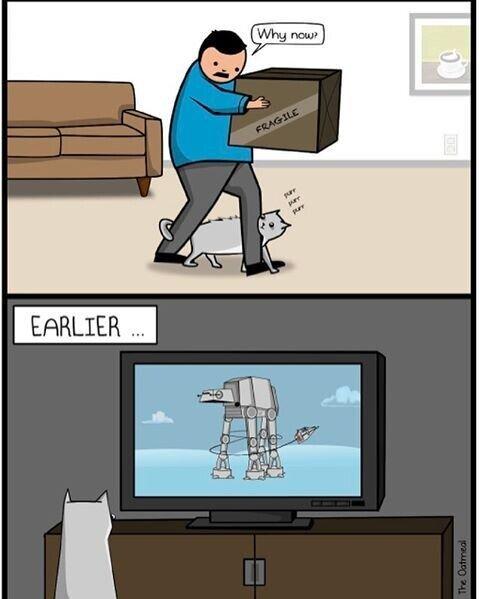 Meme_otros - El gato aprende lo que ve por la tele