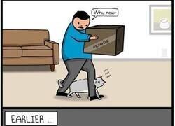 Enlace a El gato aprende lo que ve por la tele