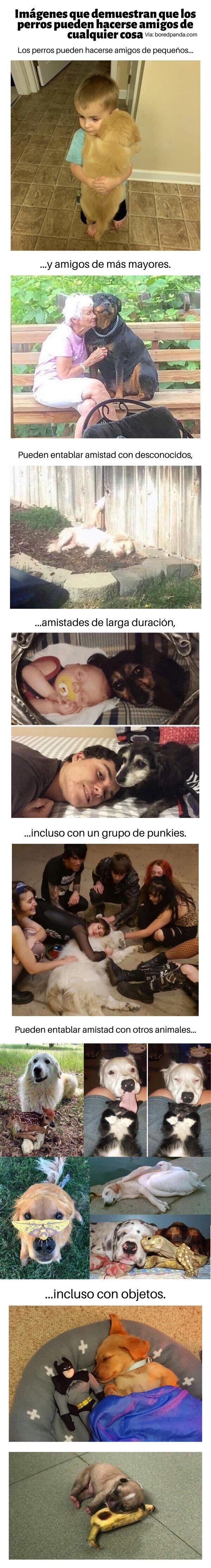 Meme_otros - Imágenes que demuestran que los perros pueden hacerse amigos de cualquier cosa