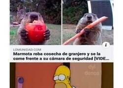 Enlace a La marmota troll