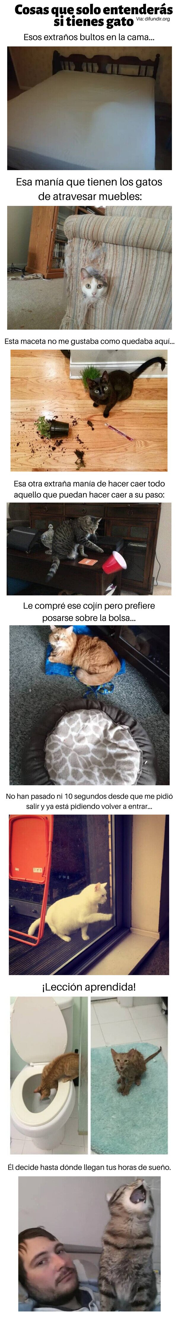 Meme_otros - Cosas que solo entenderás si tienes gato