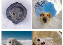 Enlace a Imágenes que demuestran que las focas son los perros del mar