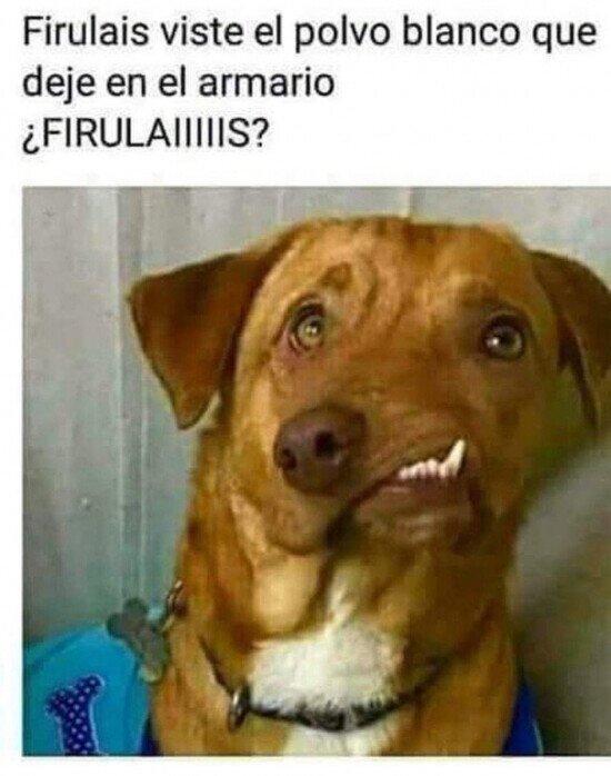 Meme_otros - ¿Por qué tienes esa cara, Firulais?