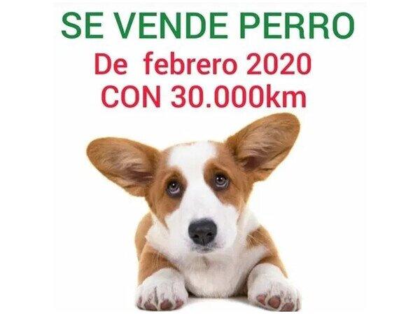 alquilar,coche,coronavirus,cuarentena,perro