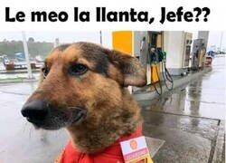 Enlace a Si los perros trabajaran en gasolineras