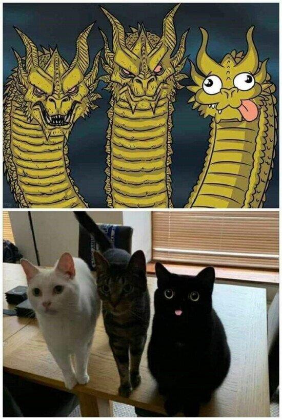 cara,dragones,gatos,meme