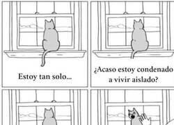 Enlace a Los gatos y su bipolaridad