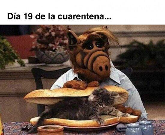 Meme_otros - Estoy a 5 minutos de comerme al gato