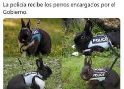 Enlace a Vaya, la empresa nos aseguró que eran perros...