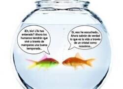 Enlace a ¿Será cosa del karma y los peces de las peceras se han vengado de nosotros?