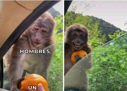 Enlace a Un mono muy mono