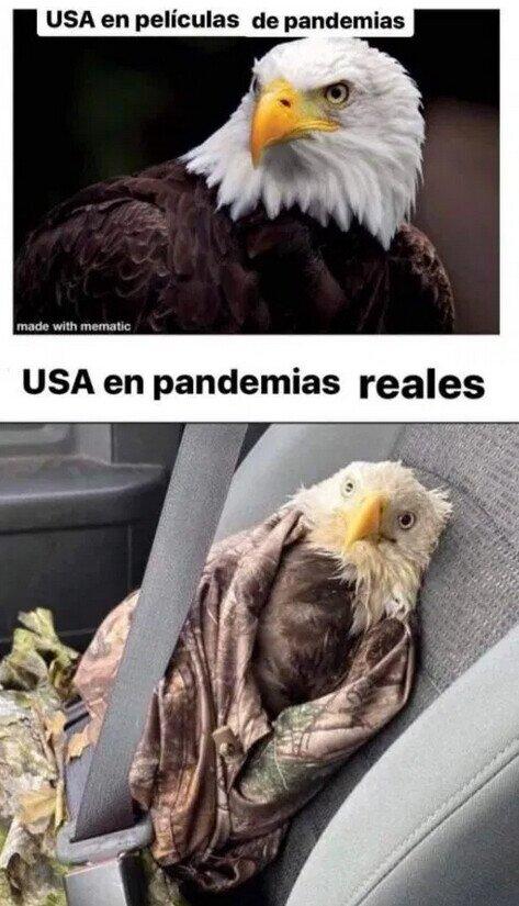 Águila,coronavirus,cuarentena,EEUU