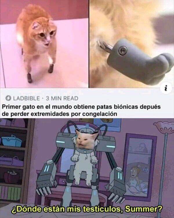 animal,bionico,gato,patas