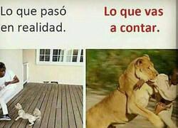 Enlace a Sí, sí, me atacó un león...