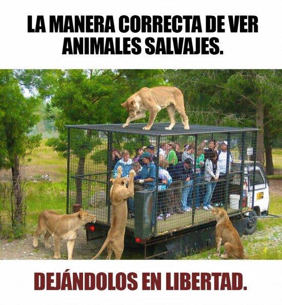 Meme_otros - Así deberían ser los zoológicos