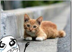Enlace a Los gatos no son de fiar