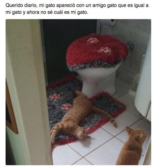 Meme_otros - Cuando la vida te obliga a adoptar otro gato
