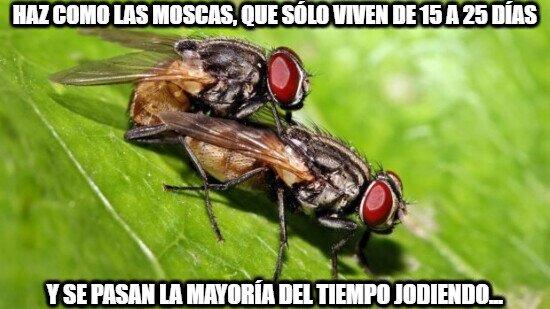 Meme_otros - Aprovechemos el tiempo como las moscas, que luego la vida es muy corta...