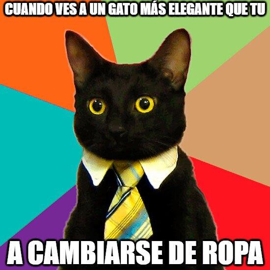 Gato_empresario - cuando ves a un gato más elegante que tú
