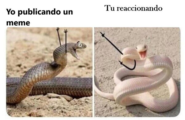 Meme_otros - Las serpientes son tan como nosotros...