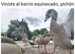 Enlace a Las aves son gente muy chunga