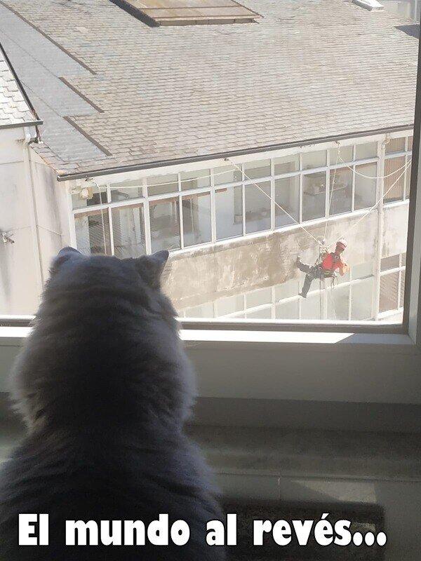 Gato_empresario - ¿Qué fue de los gatos en los tejados?