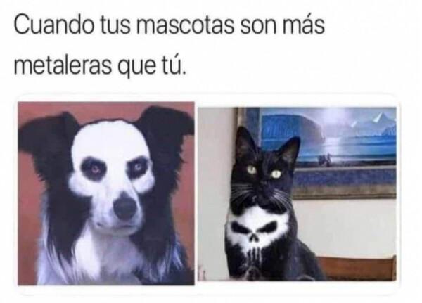 animales,gato,mascotas,metal,perro