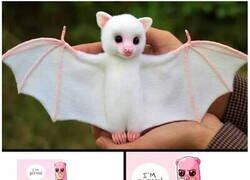 Enlace a ¿Qué murciélago es ese?