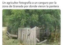 Enlace a La extensa fauna de Granada