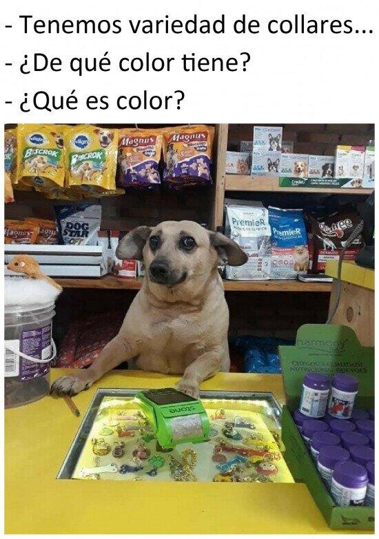 Meme_otros - Si los perros vendiesen souvenirs