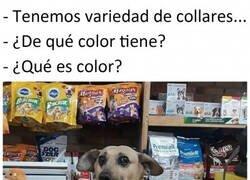 Enlace a Si los perros vendiesen souvenirs