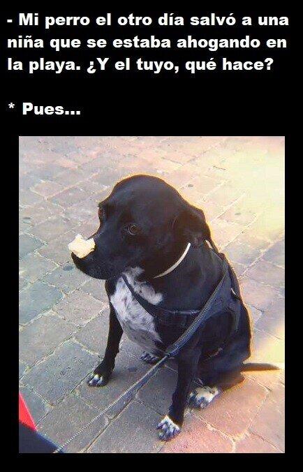 Meme_otros - Cada perro tiene sus habilidades o dones especiales...