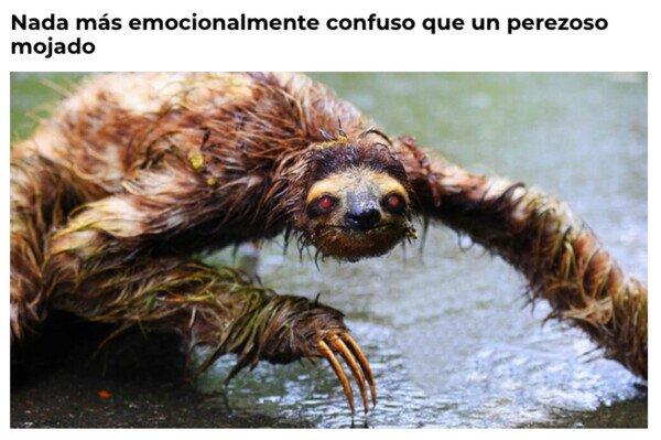 animal,confuso,mojado,perezoso