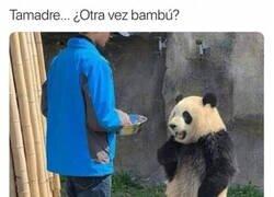 Enlace a Un panda exigente
