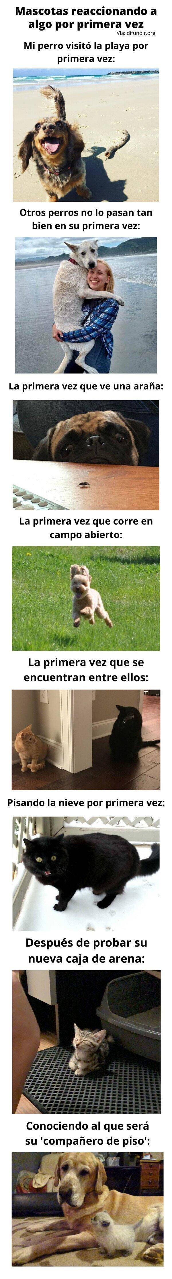 Meme_otros - Mascotas reaccionando a algo por primera vez