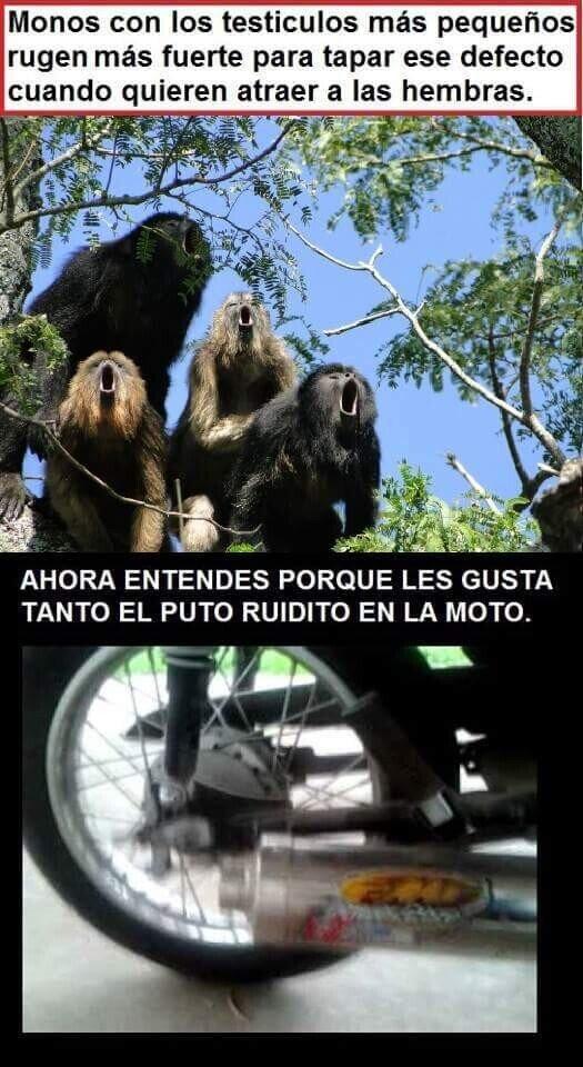 gritar,monos,moto,ruido,testiculos